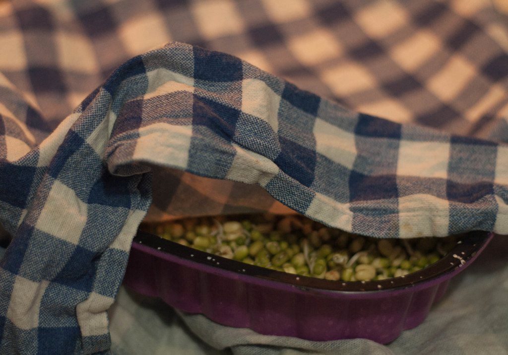sprouting lentils (1 of 1)-5